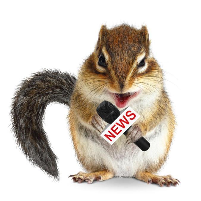 scoiattolo-animale-divertente-con-il-microfono-di-notizie-61319724